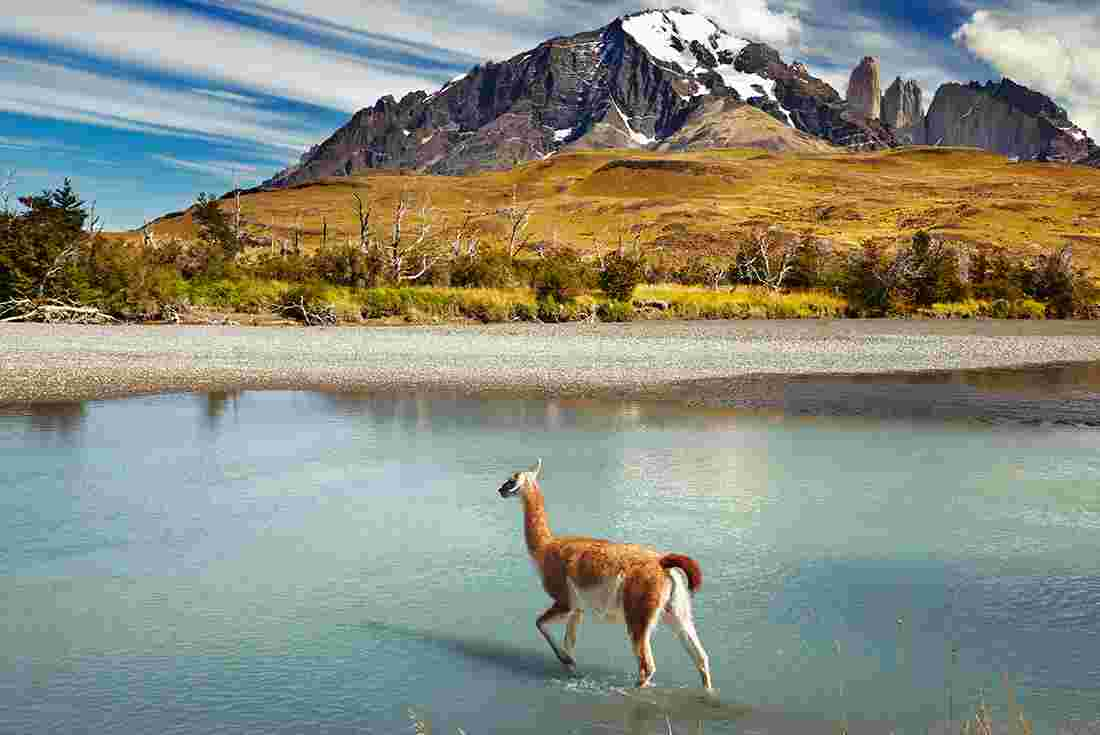 Patagonia South America >> Patagonia Wilderness Intrepid Travel