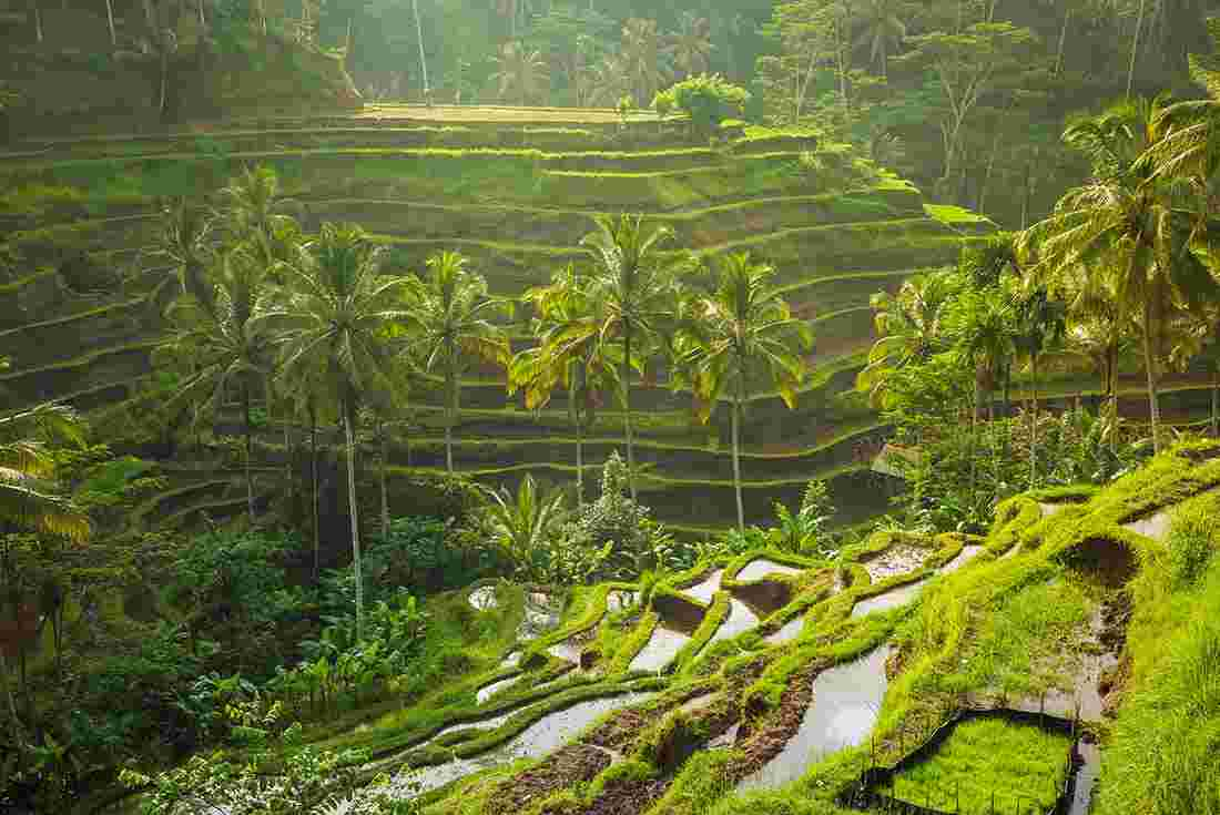 Beautiful Bali For Solo Travellers Intrepid Travel