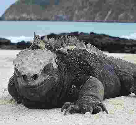 Galapagos Islands Travel Tours