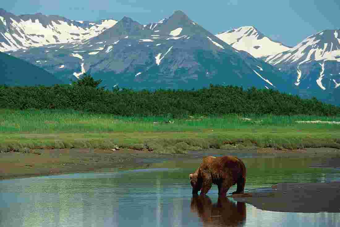 Alaska Tours Amp Travel Intrepid Travel Us