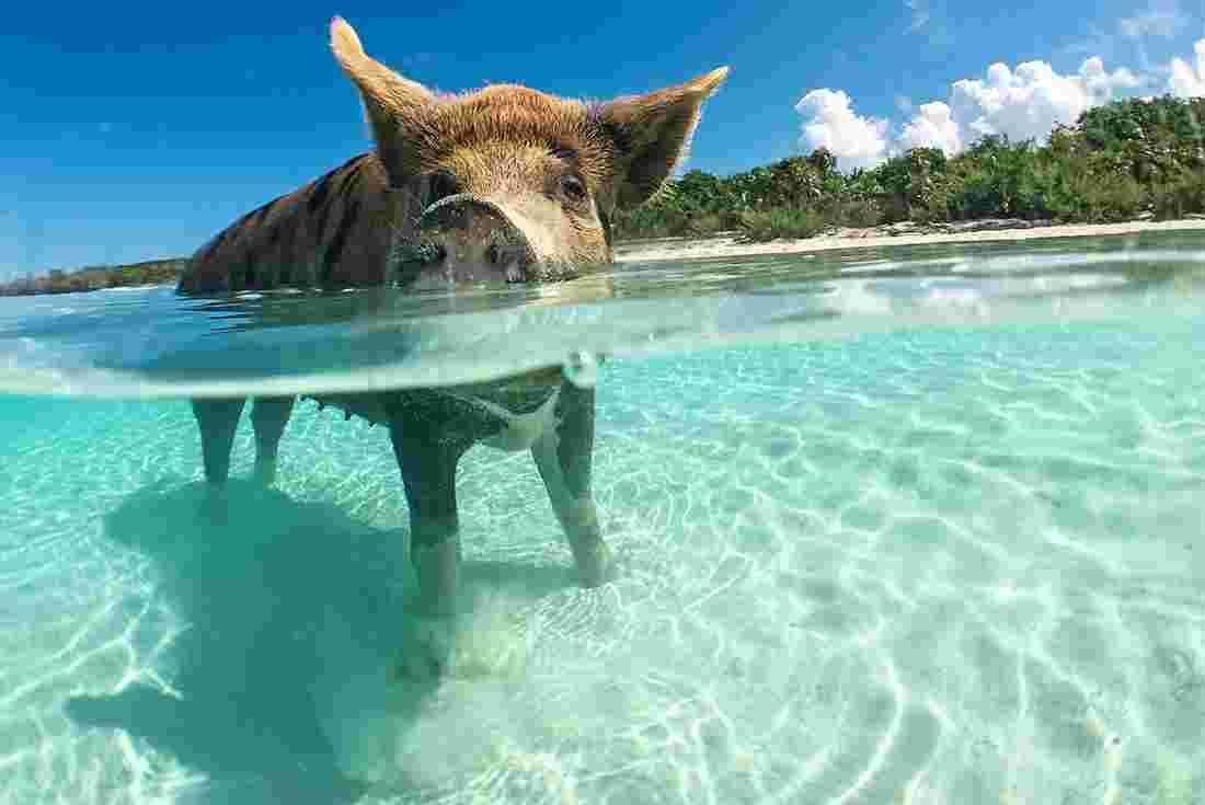 bahamas tours travel intrepid travel us