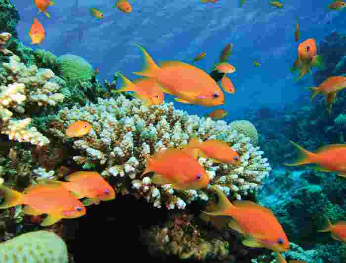 Egypt tours travel intrepid travel us for Red sea fish