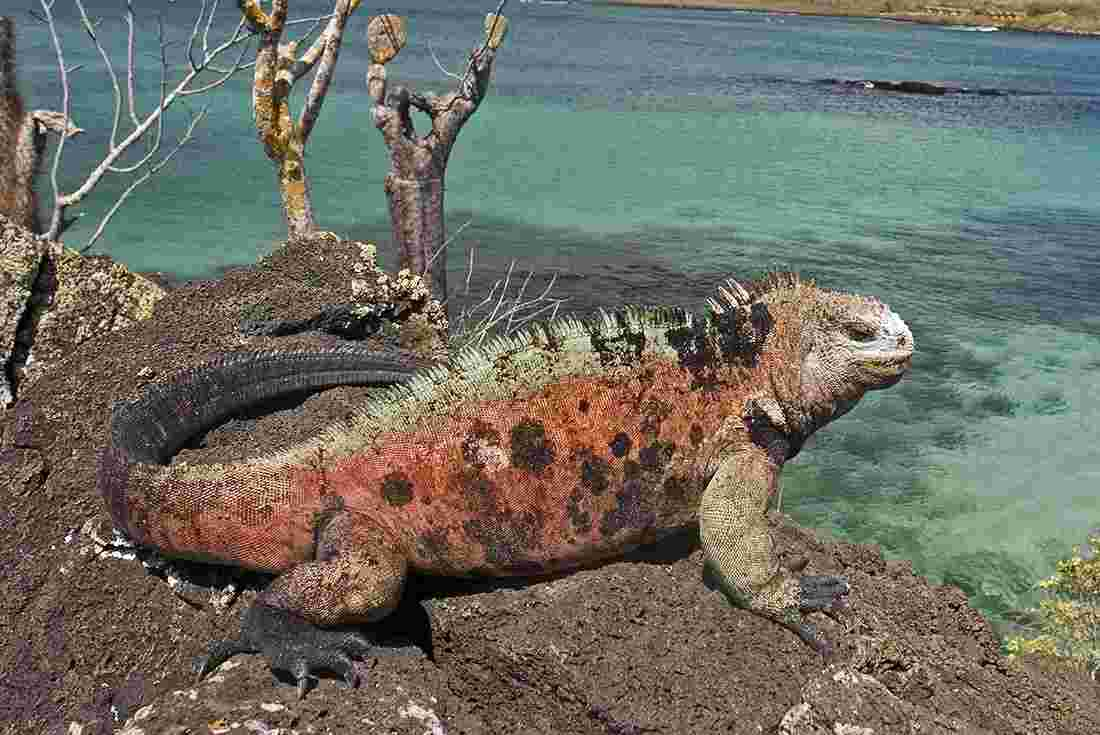 galapagos islands tours & travel | intrepid travel us