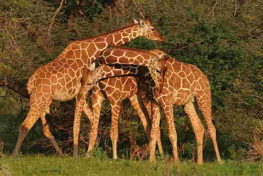 Kenya tours travel intrepid us