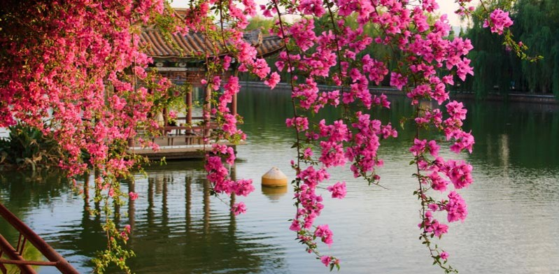 china in the spring time