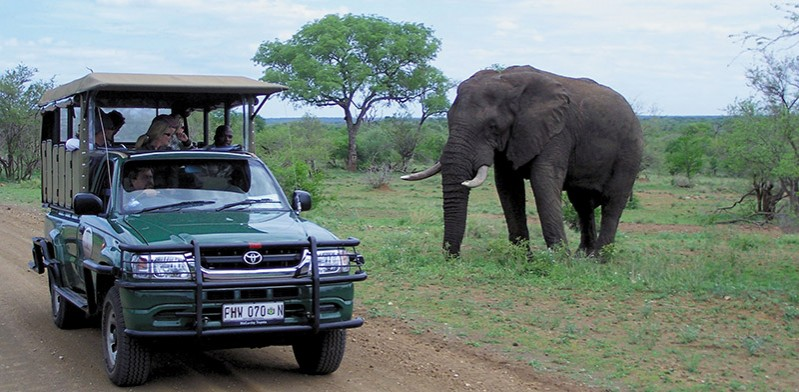 Kruger game drive in South Africa
