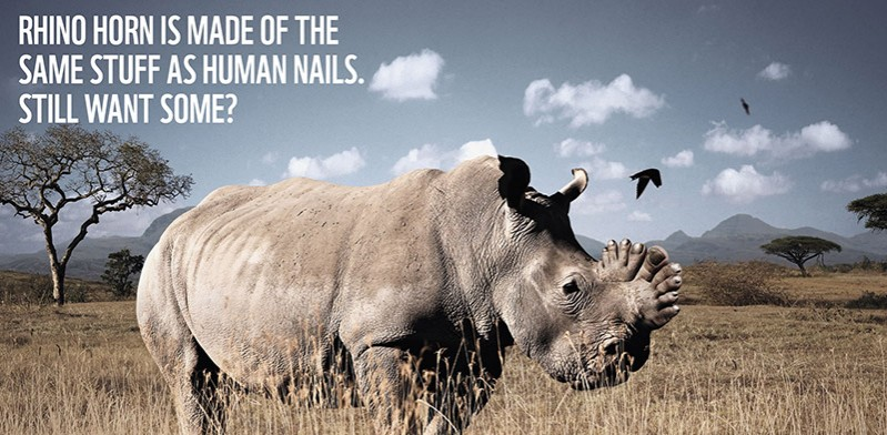 Save the Rhino campaign