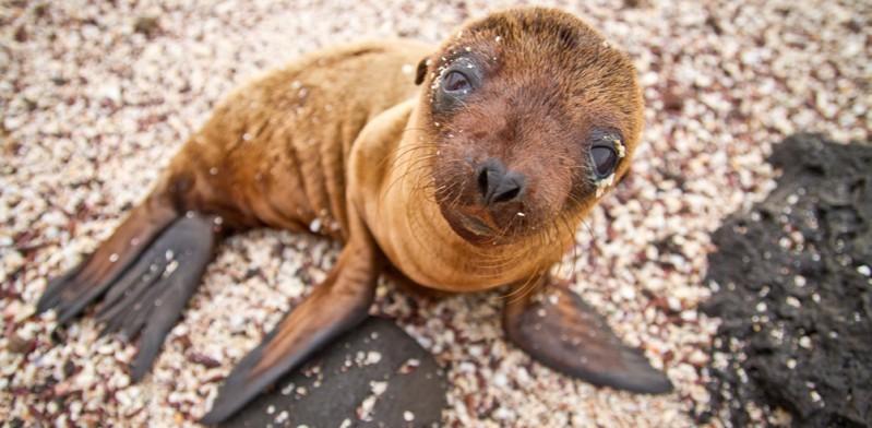 galapagos-island-seal