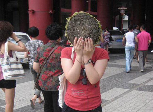 sunflower head on silk road china
