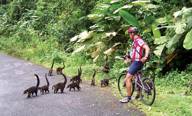 Give way to wildlife in Costa Rica