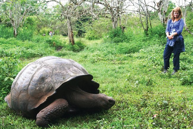 The extraordinary giant tortoise of the Galapagos Islands