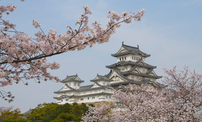 Beautiful Himeji Castle in full blossom Japan
