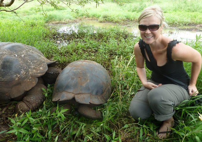 Giant tortoise in the Galapagos Islands Ecuador