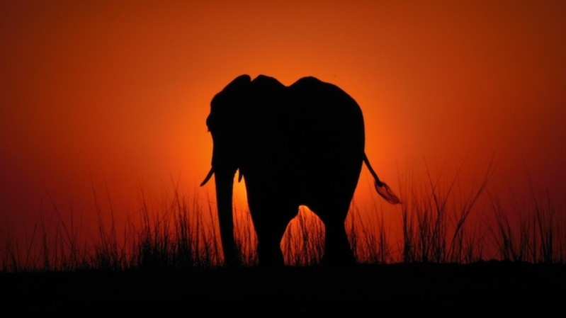 botswana_chobe-national-park_elephant-sunset