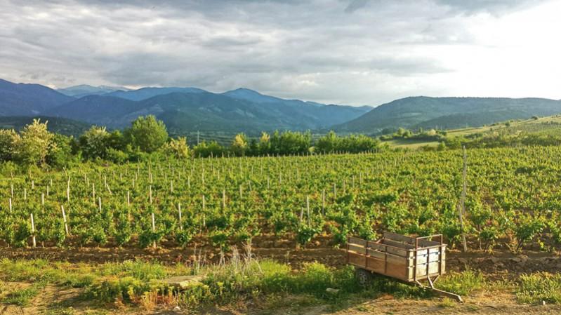 macedonian-wine-guide---jane-josifovski