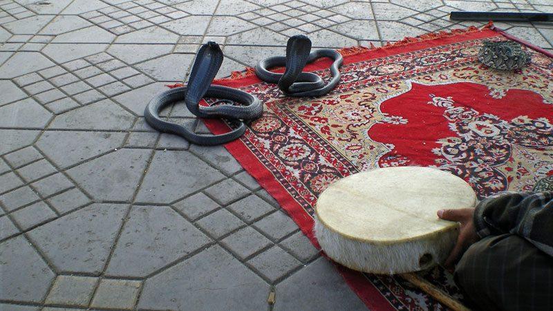 snake-charming---ali-catterall