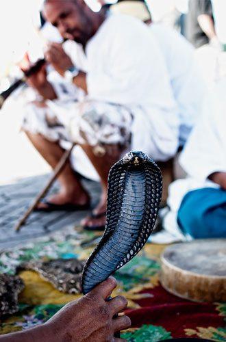 snake-charming---ryan-ritchie