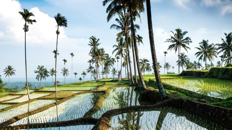 Weather in Bali, Rice Paddy