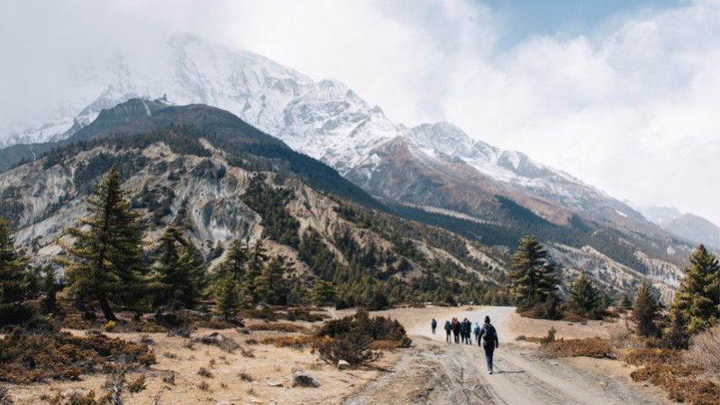 Nepal---common-wanderer