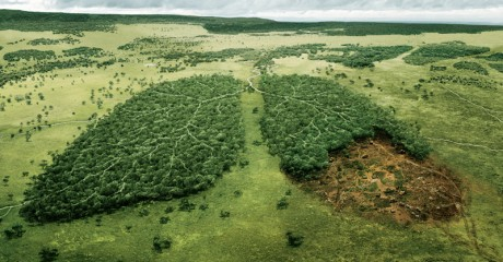 carbon-neutral---wwf