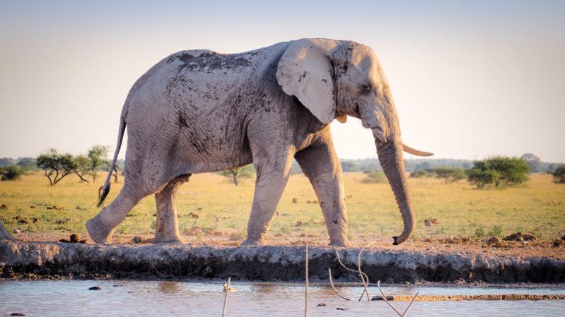 Elephants---Unsplash
