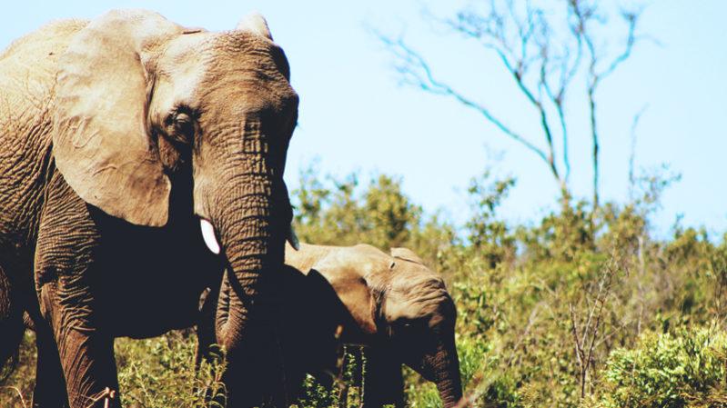 Ethical-animal-tourism---Unsplash