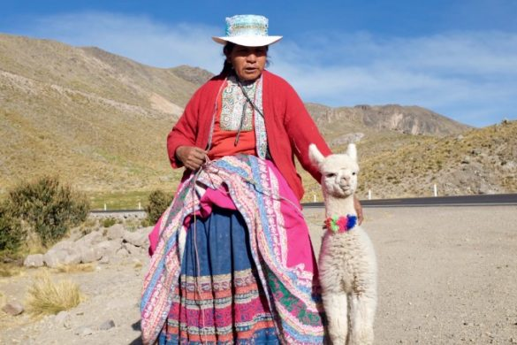 A Peruvian woman stands next to a small alpaca