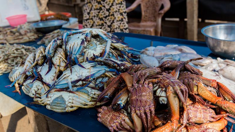 Fresh crabs at the Negombo Fish Markets