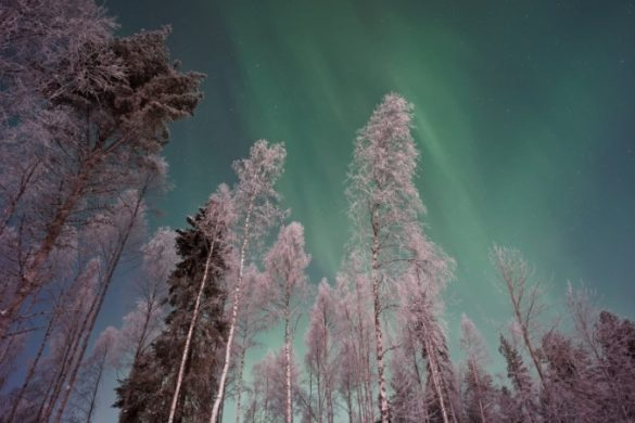 Northern Lights in the sky with bare winter trees in the foreground